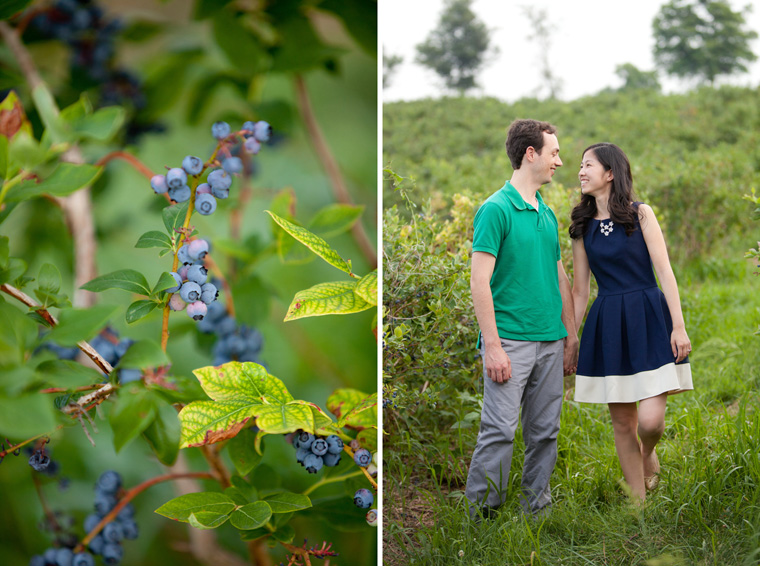 Butler's Orchard Engagement Session Photos by Liz and Ryan Farm Engagement Session Pick Your Own Farm Blueberries Blueberry Soda Blueberry Beer Picnic Engagement Session Maryland Wedding and Engagement Photography Pick Your Own Blueberries Pick Your Own Flowers Flower Fields Photos by Liz and Ryan (15)